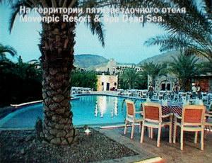 На территории пятизвездочного отеля Movenpic Resort & Spa Dead Sea