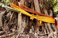 За Буддой, Бодхгая, Индия
